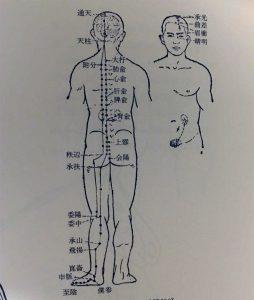 中(獣)医学と鍼灸