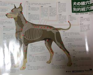 非売品 犬のツボポスター