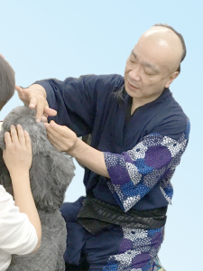 jtcvm 国際中獣医アカデミー日本校 進修課程