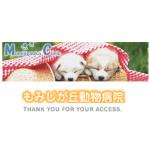 小松直子|国際中獣医学院日本校認定中獣医鍼灸師