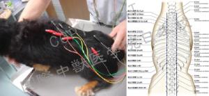 低周波パルス療法01|JTCVM国際中獣医学院日本校