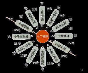 養生時計|JTCVM国際中獣医学院日本校