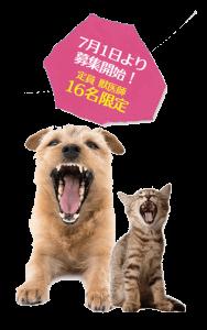 飼い主様目線の獣医歯科診療|JTCVM国際中獣医学院日本校