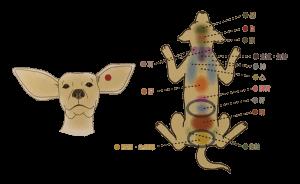 動物の反射区|JTCVM国際中獣医学院日本校