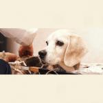 関口弘美|JTCVM国際中獣医学院日本校認定中獣医鍼灸師