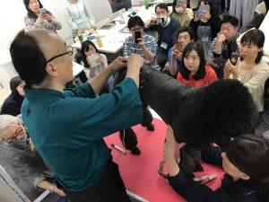 中獣医鍼灸師養成講座(第五期)|JTCVM国際中獣医学院日本校