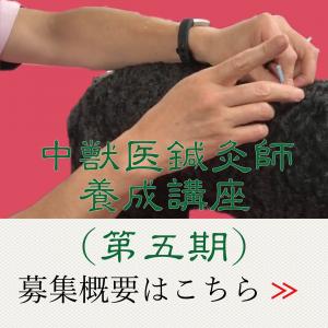 鍼灸(第五期)|国際中獣医学院日本校