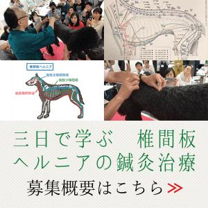 三日で学ぶ椎間板ヘルニアの鍼灸治療|国際中獣医学院日本校小動物臨床鍼灸学入門講座