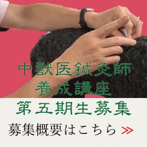 中獣医鍼灸師養成(第五期生)募集|国際中獣医学院日本校