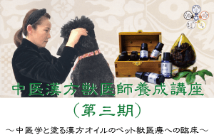 中医漢方獣医師養成講座|中医学と塗る漢方オイルによるペットへの応用と臨床|JTCVM国際中獣医学院日本校