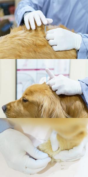 中獣医鍼灸師養成講座(第六期)オンライン オリエンテーション