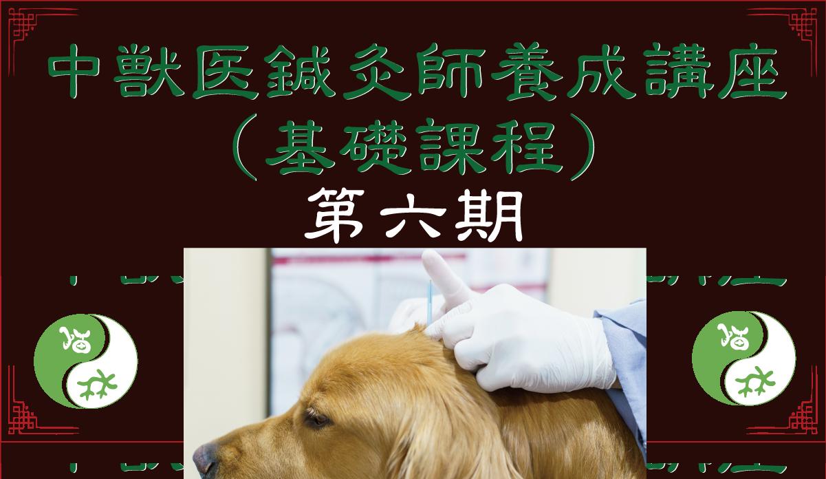 中獣医鍼灸師養成講座(基礎課程)第六期|JTCVM国際中獣医学院日本校