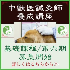 中獣医鍼灸師養成講座|国際中獣医学院日本校事務局