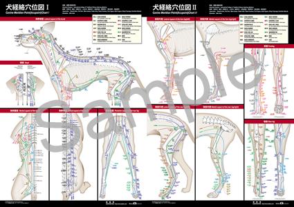 犬経絡穴位図(1・2)|JTCVM国際中獣医学院日本校