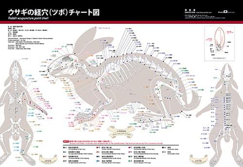 ウサギの経穴(ツボ)チャート図|国際中獣医学院日本校
