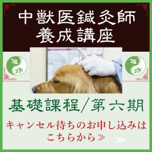 中獣医鍼灸師養成講座|国際中獣医学院日本校